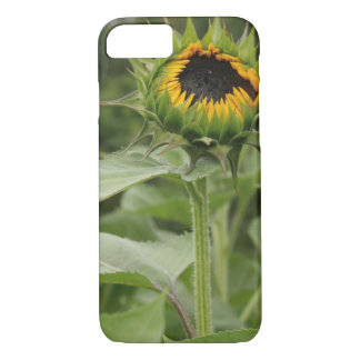 iPhone case sunflower