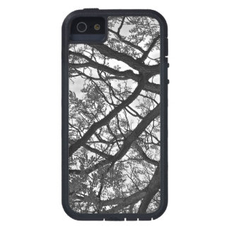 iPhone Case; Tree Black and White Photo iPhone 5 Cases