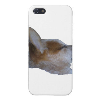 iPhone Cover, Red Dog Sleeping iPhone 5/5S Covers