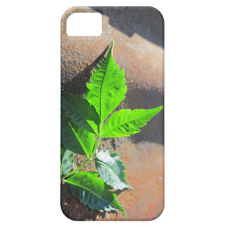 iPhone SE Leaf on Tin Case For The iPhone 5