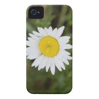 iPod Touch Case - Daisy