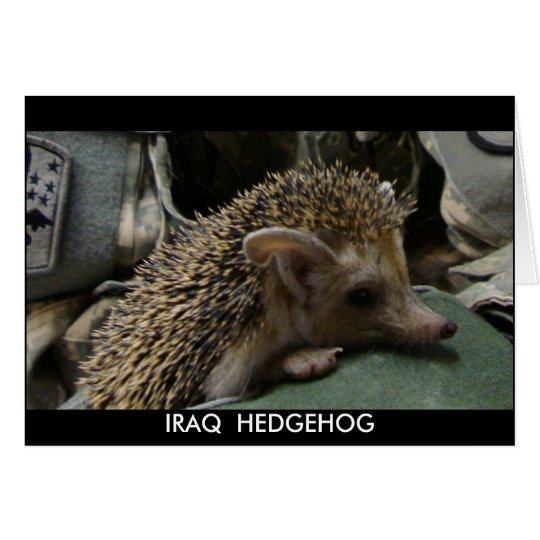 IRAQ  HEDGEHOG BLANK NOTE CARD