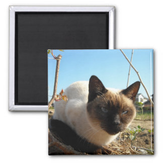Irate Kitty Magnet