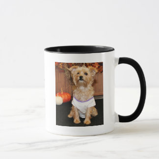 Irene - Shorkie - Photo-3 Mug