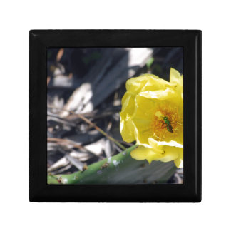 iridescent bee on nopales flower gift box