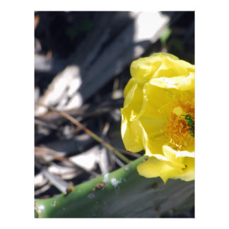 iridescent bee on nopales flower letterhead