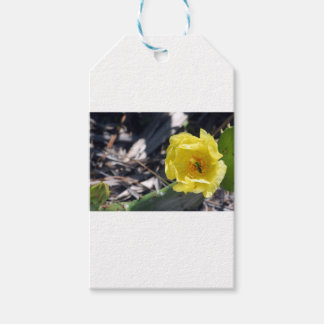 iridescent bee on nopales flower pack of gift tags