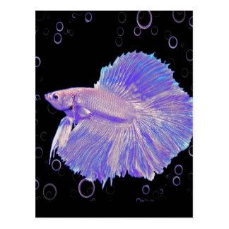 Iridescent Purple Fighting Fish Postcard