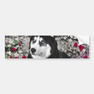 Irie the Siberian Husky in Flowers Bumper Sticker