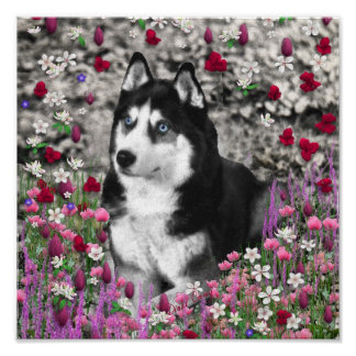 Irie the Siberian Husky in Flowers Poster