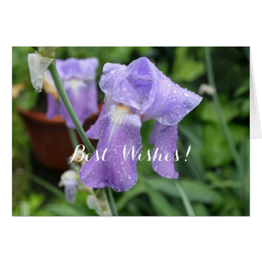 Iris after the rain. card