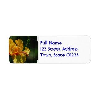 Iris barbu jaune étiquette d'adresse retour