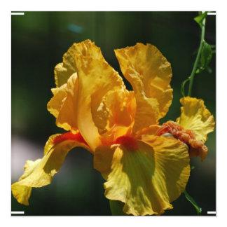 Iris barbu jaune faire-parts