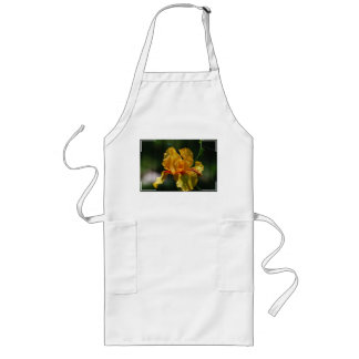 Iris barbu jaune tablier