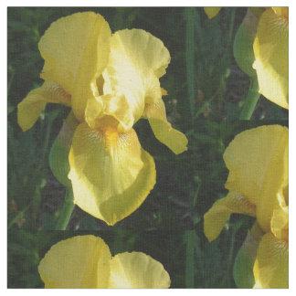 Iris barbu jaune tissu