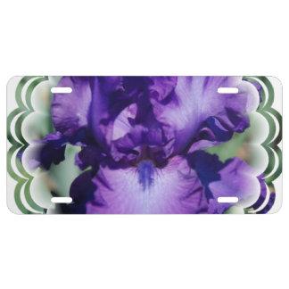 Iris barbu pourpre plaque d'immatriculation