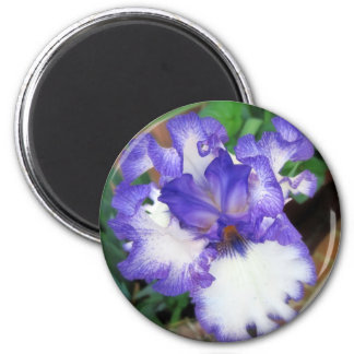 Iris ~ Blue and White Magnet