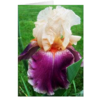 Iris Card