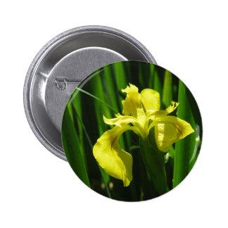 Iris de drapeau jaune badges avec agrafe