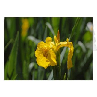 Iris de drapeau jaune (pseudacorus d'iris) carte de vœux