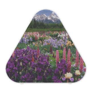 Iris et jardin de loup et chaîne de Teton