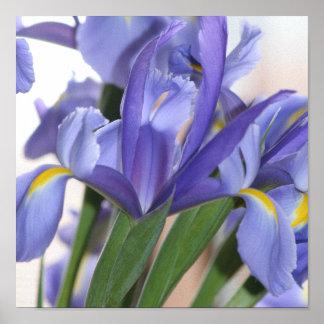 Iris Explosion print