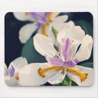 Iris flowers mouse pad