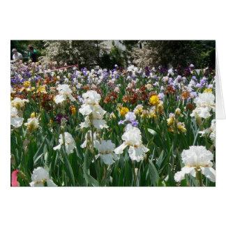 Iris Garden 4 Card