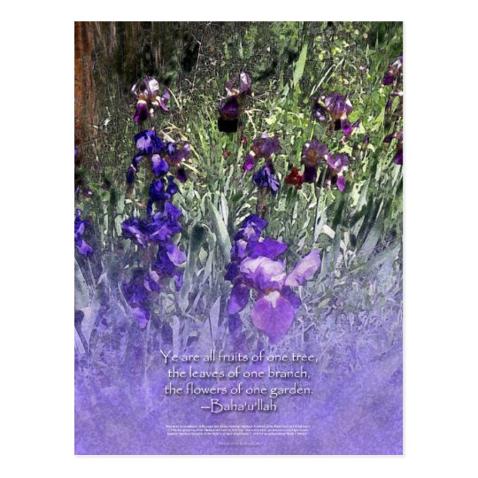 Iris Garden Baha'i Quotation Postcard