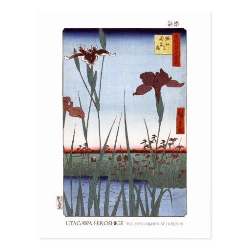 Iris Garden Postcard