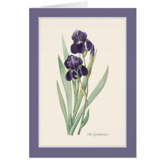 Iris Germanica Botanical Note Card