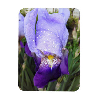 Iris germanique pourpre avec quelques gouttes de magnet flexible