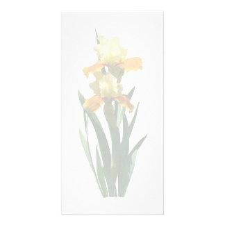 Iris Honey Glazed Photo Greeting Card