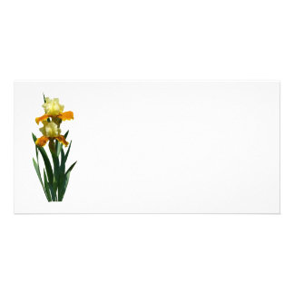 Iris Honey Glazed Custom Photo Card