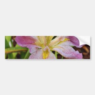 Iris imberbe Rose-Jaune Autocollant De Voiture