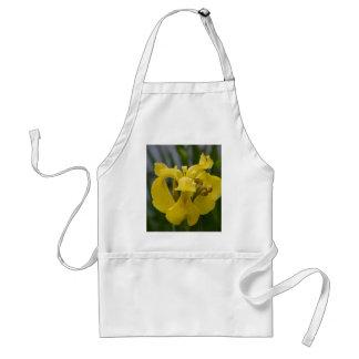 Iris jaune tablier