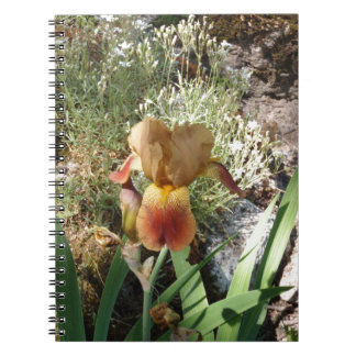 Iris jaune carnets