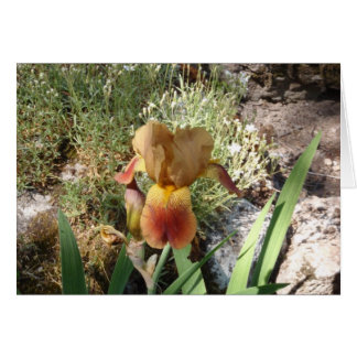Iris jaune carte