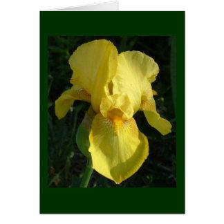 Iris jaune carte de correspondance