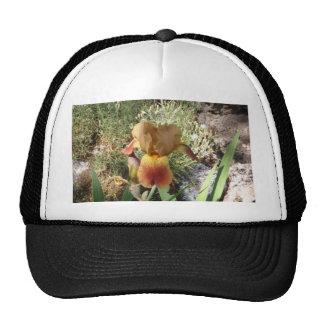 Iris jaune casquette