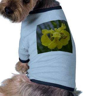 Iris jaune vêtements pour animaux domestiques