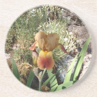 Iris jaune dessous de verre