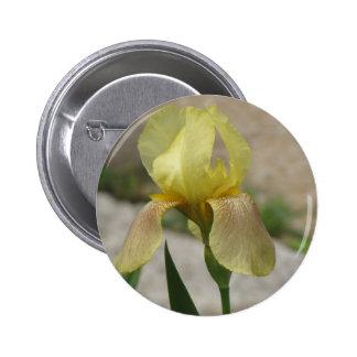 Iris jaune loin badge avec épingle