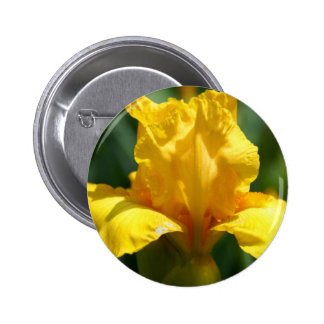 Iris jaune lumineux pin's avec agrafe