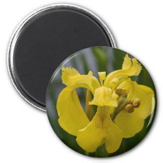 Iris jaune magnets pour réfrigérateur
