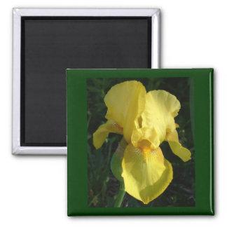 Iris jaune magnet carré