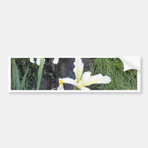 Iris jaune pâle adhésif pour voiture