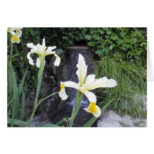 Iris jaune pâle carte