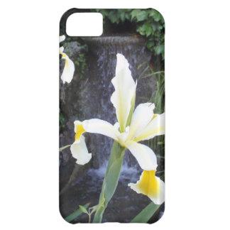 Iris jaune pâle