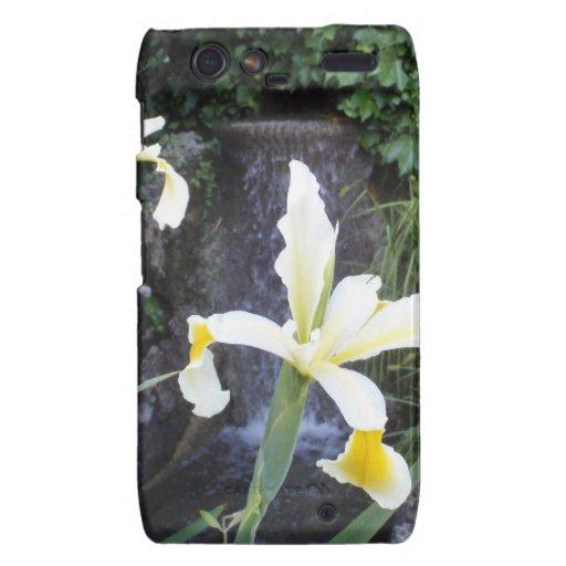 Iris jaune pâle coques motorola droid RAZR
